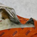 Vet-Blanket